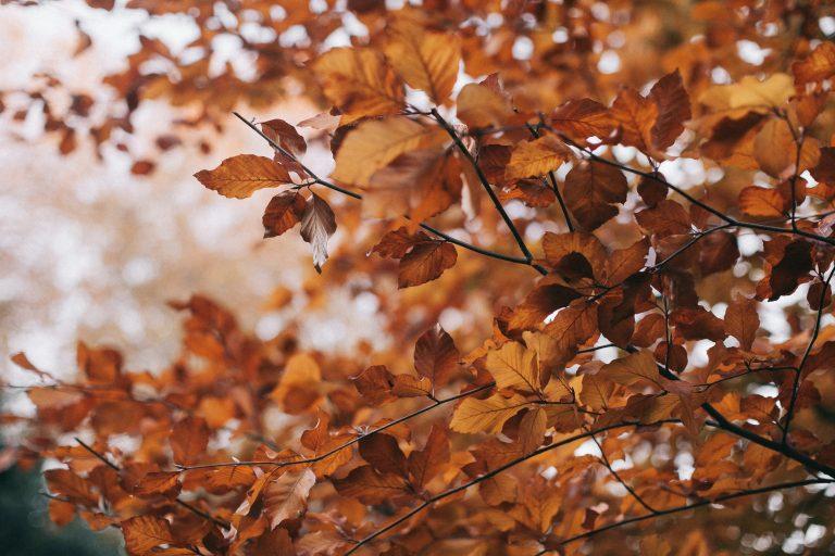 Yard Leaves Removal Denver, CO